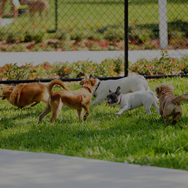Large Dog Park at Brio on Broadway Apartments